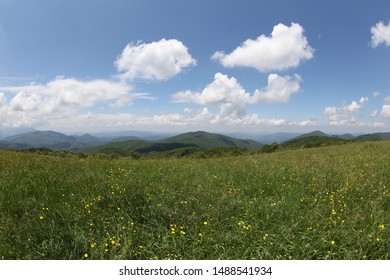 field of wildflowers along Appalachian trail