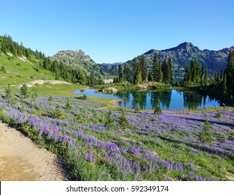 Field of wildflowers on the Pacific Crest Trail in Washington state in summer of 2016. This is in the Wenatchee National Forest. This trail also offers views of Mount Rainier.
