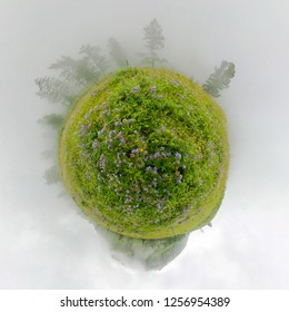 Field of willow-tea on a cloudy day. Spherical 360-degree vr panorama. Tiny planet 360vr panorama