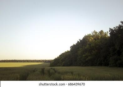 Field and windbreak