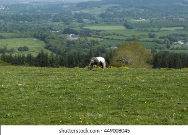 Field witha horse eating