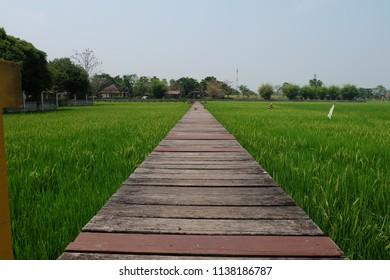 field and wood bridge