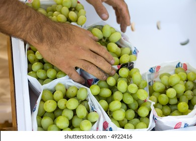 Field worker packages seedless grapes, Central California