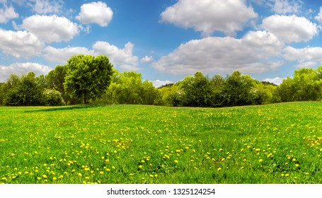 Field with yellow dandelions and blue sky ,great as a background