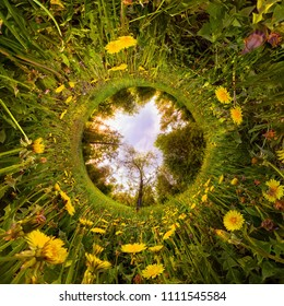 Field of yellow dandelions in the green forest at sunset. Tiny Little Planet