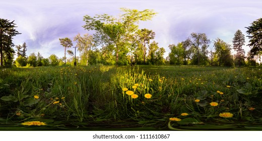 Field of yellow dandelions in the green forest at sunset. Spherical 360vr degree panorama