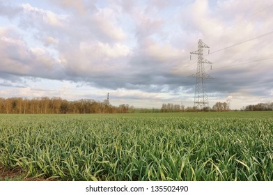 field of young green wheat shoots under a cloudy sky and a electric pylon