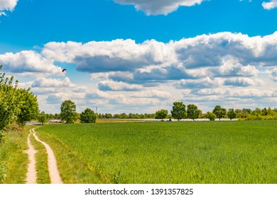 Fields at the city boundary between Berlin and Brandenburg, Germany. Over the landscape, white clouds can be seen in a bright blue sky. Between fields and bushes leads a sandy dirt road along.