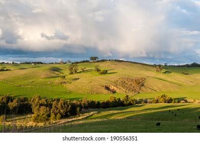 Fields in country victoria, australia