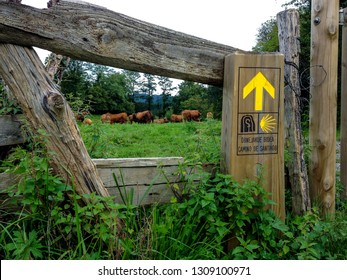 Fields with cows eating grass next to a wooden sign showing the way to Santiago de Compostela on Basque Country, pilgrimage route Camino del Norte or the Coastal Saint James Way