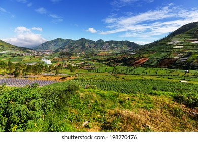 Fields in Dieng Plateo,Indonesia,Java