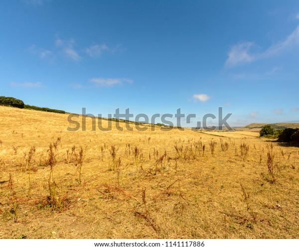 Fields in Dorset D, Dorset Landscape Summer 2018