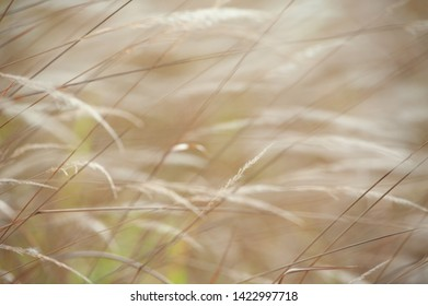 Fields dry grass for background.
