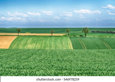 Fields during the spring time in Poland