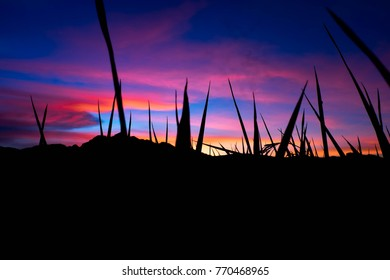 Fields in the evening