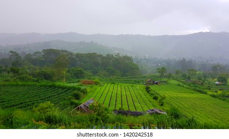 Fields farmers in Bali. Beautiful views of the mountains and volcanoes. Tropical landscape in a light haze.