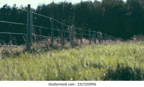 Fields of flower, Ameland wadden island Holland