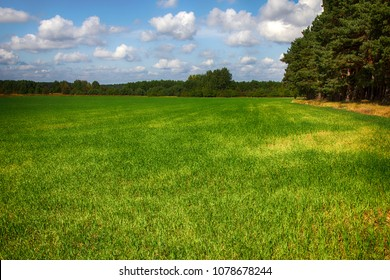 Fields of forage grasses surrounded by forests in Germany, Bavaria