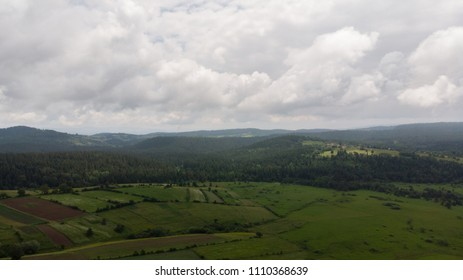 fields and forest