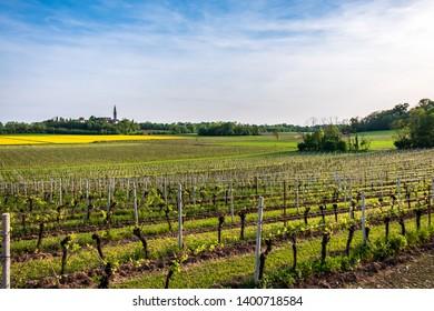 Fields of Friuli Venezia-Giulia in a spring day