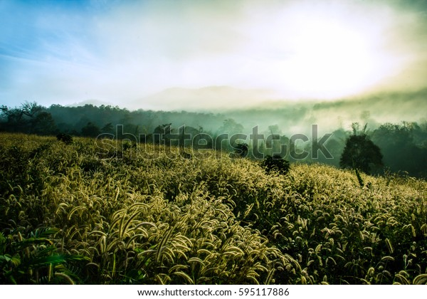 Fields of grass during the morning sunrise in Pai District, Mae Hong Son Province ,Thailand