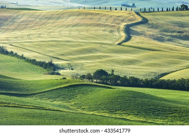 fields and hills in morning time