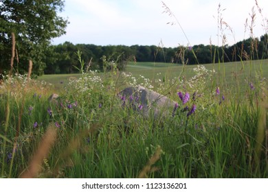 Fields of Michigan Summer