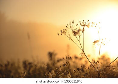 Fields in the morning with a fog. Misty morning in the fields. Background. Sunrise in the foggy field. Wild plants.