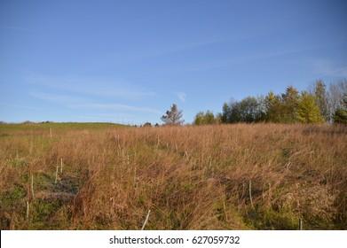 Fields in the morning light