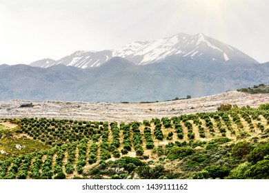 Fields and mountains on the North coast of Crete in Greece