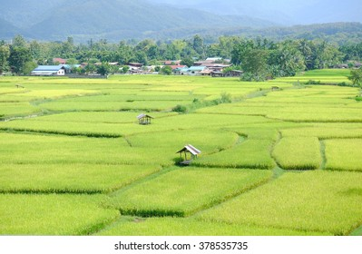 Fields in Nan province, Thailand