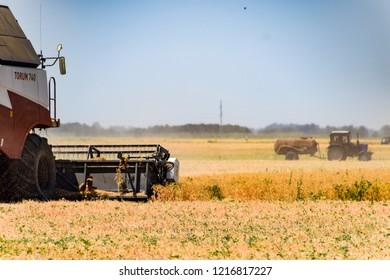 Fields near Krasnodar, Russia - June 21, 2018: Harvesting peas with a combine harvester. Harvesting peas from the fields.