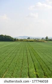 FIelds near Voghera (Pavia, Lombardy, Italy) at summer
