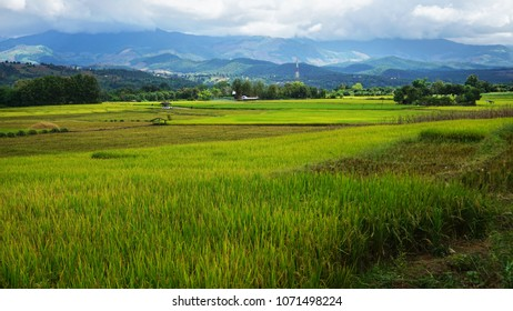 Fields of Northern Thailand