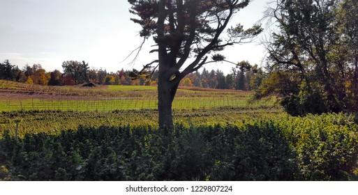 Fields in October in Ontario