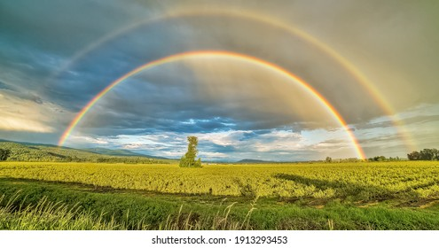 Fields of Plants Under Rainbow Skies And Cloudy During The Day