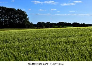 Fields of rural Denmark