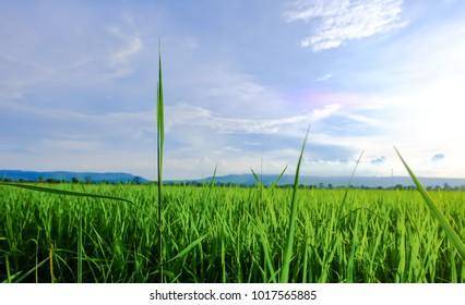 Fields of sky and sunshine