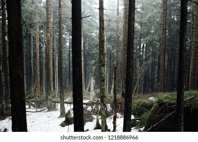 Fields of snow in the Harz mountains, Winter in the forest