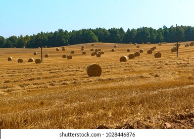 fields with twisted haystacks, twisted hay in the field, bundles of hay