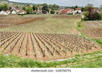 Fields of vineyards are planted right next to the walls of the buildings near the town of Gevrey-Chambertin in the Burgundy region of France.