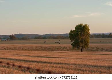 Fields in Wagga Wagga, NSW, Australia