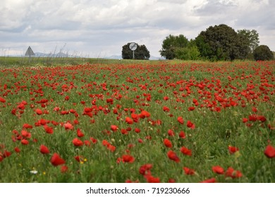 FIELDS OF WHEAT AND POPPIES