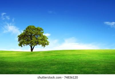 Feld, Baum und blauer Himmel