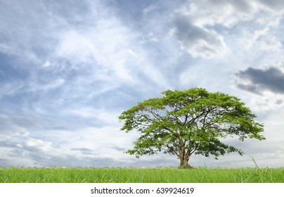 Field,tree and sky