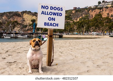 fierce dog on beach tied to a no dogs allowed on beach sign