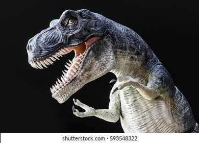 Fierce Tyrannosaurus Rex with large teeth, wild eye and claws roaring against dark background, dinosaur model