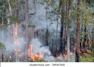 Fiery blaze moving through trees and creating plumes of smoke