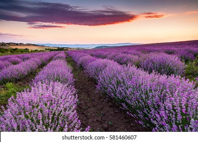 Fiery cloud above a purple valley of lavender