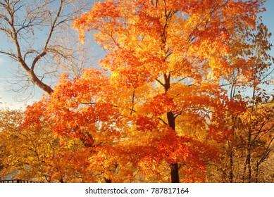 fiery fall foliage